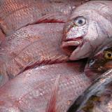 FISH_0294